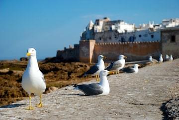 Essaouira Medina Tour